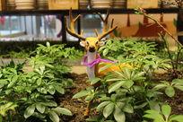 草丛中的梅花鹿