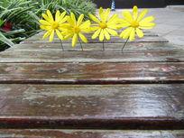 从木缝里生长出来的花