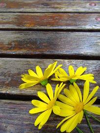 角落里的花