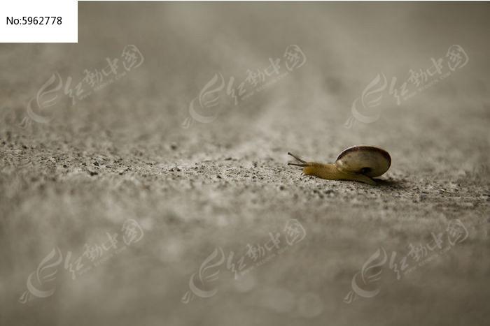 迷路的小蜗牛图片,高清大图_陆地动物素材