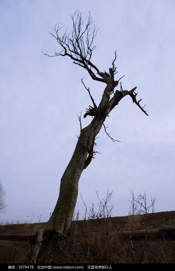 一颗枯死的树图片,高清大图_树木枝叶素材