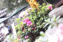 锦里的花草