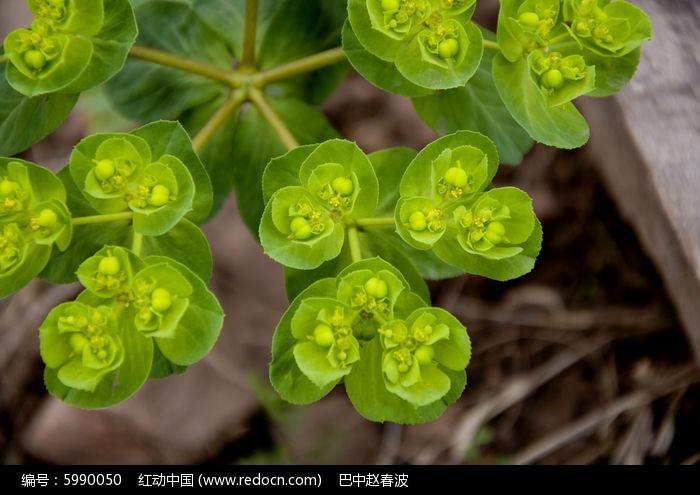 原创摄影图 动物植物 花卉花草 绿草图片