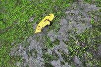 青苔石上的落叶