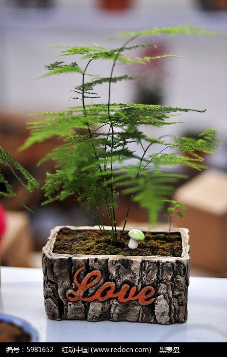 原创摄影图 动物植物 花卉花草 虚幻的文竹盆景