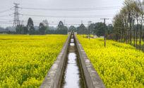 油菜花田野中架空的水渠