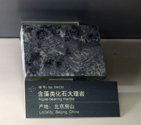 北京房山含藻类化石大理岩
