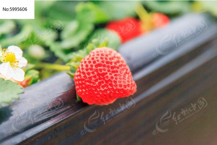 素材描述:红动网提供水果蔬菜精美高清图片下载,您当前访问图片主题是草莓果实,编号是5995606, 文件格式是JPG,拍摄设备是Adobe Photoshop CC 2015 (Windows),您下载的是一个压缩包文件,请解压后再使用看图软件打开,色彩模式是,图片像素是5616*3744像素,素材大小 是18.6 MB。
