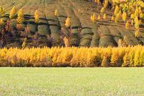 鎏金的山林