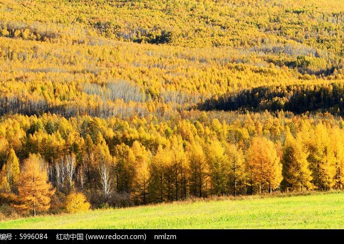 森林 秋季 地理 风光 林海 秋色 金秋 山林 树林 风景  风景区 自然