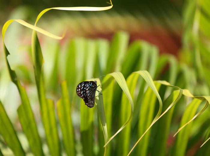 原创摄影图 动物植物 昆虫世界 落在小草上的蝴蝶  请您分享: 红动网