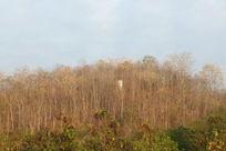 泰国乡村林木