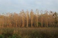 泰国乡村田园树木