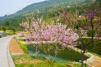 乡村田园景色图片