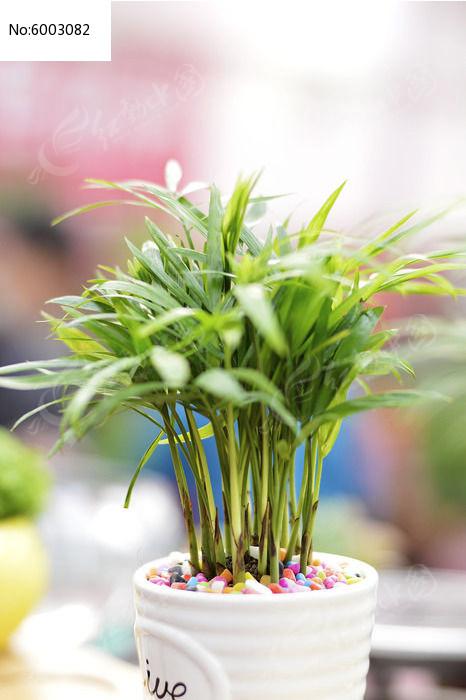 原创摄影图 动物植物 花卉花草 小叶竹盆景  请您分享: 素材描述:红动