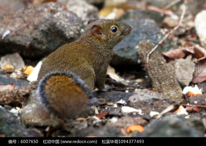 机灵的松鼠图片,高清大图_陆地动物素材