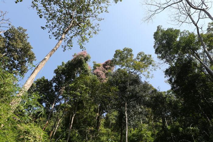 清迈的山区林木