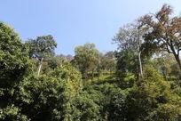 清迈的原始森林