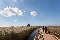 湿地栈道的游客