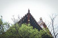 寺庙一角的一抹春色