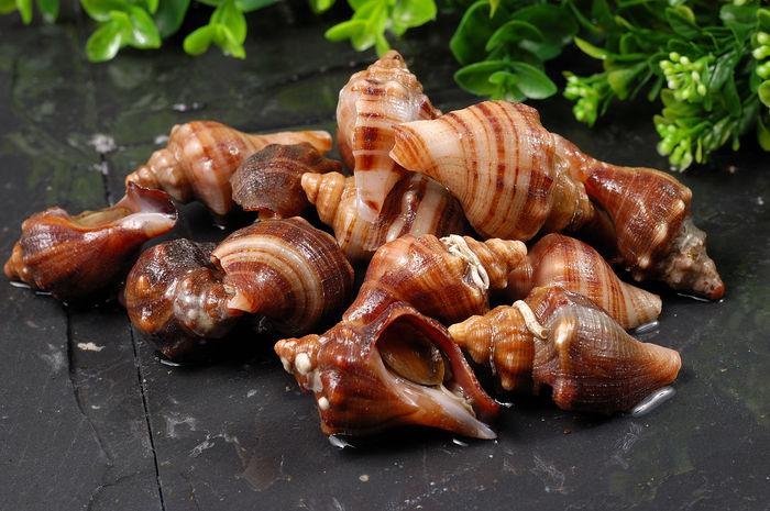 小海螺图片
