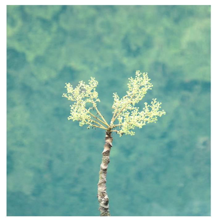 小清新植物图片,高清大图