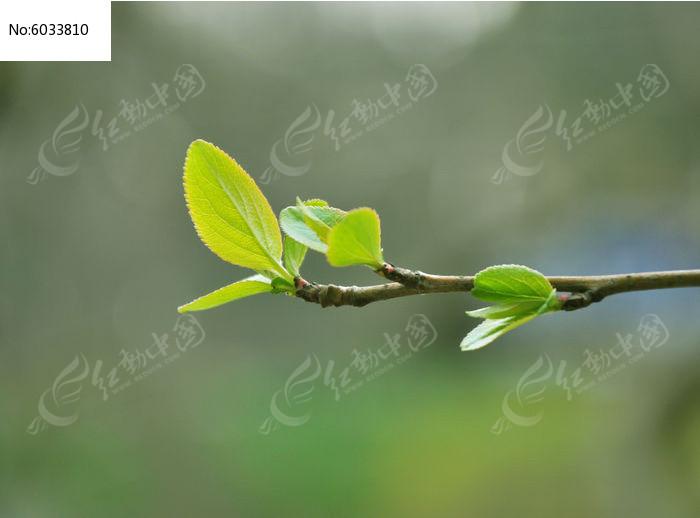 原创摄影图 动物植物 树木枝叶 春天的新叶  请您分享: 红动网提供