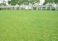 高清草坪实拍