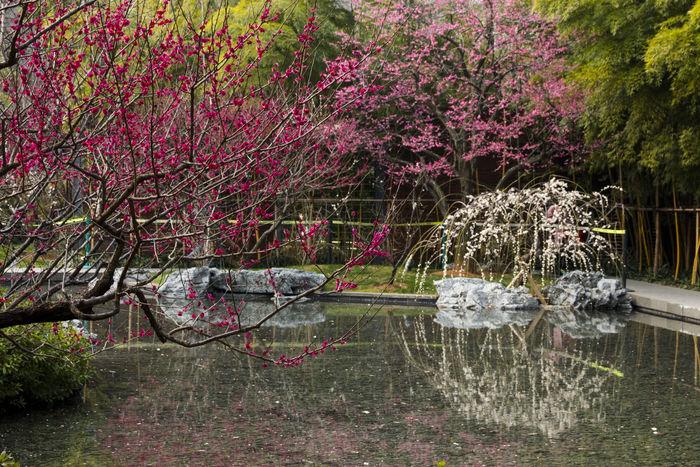 梅花园林造型图片