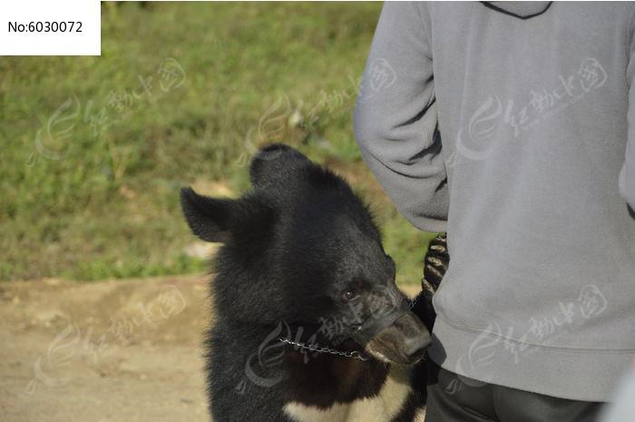 小黑熊图片,高清大图_陆地动物素材