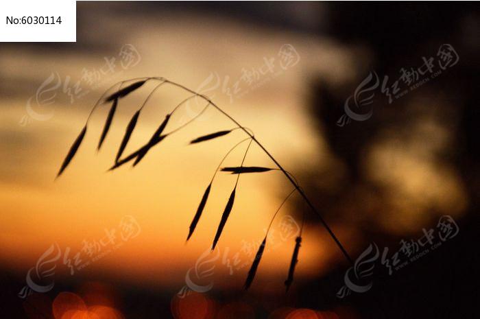 原创摄影图 动物植物 花卉花草 夕阳剪影  请您分享: 红动网提供花卉