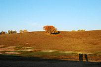 金色草原风景