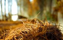 金色的落叶