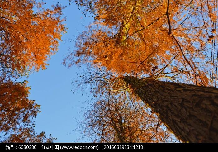 秋天树林的天空