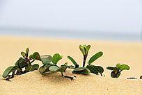 沙滩上的植物