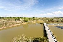 湿地栈道柽柳林