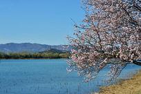 美丽的颐和园西湖