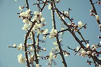 优美的梅花花枝