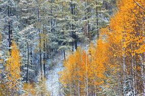 林海秋雪风光