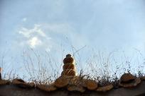 寺庙琉璃瓦顶