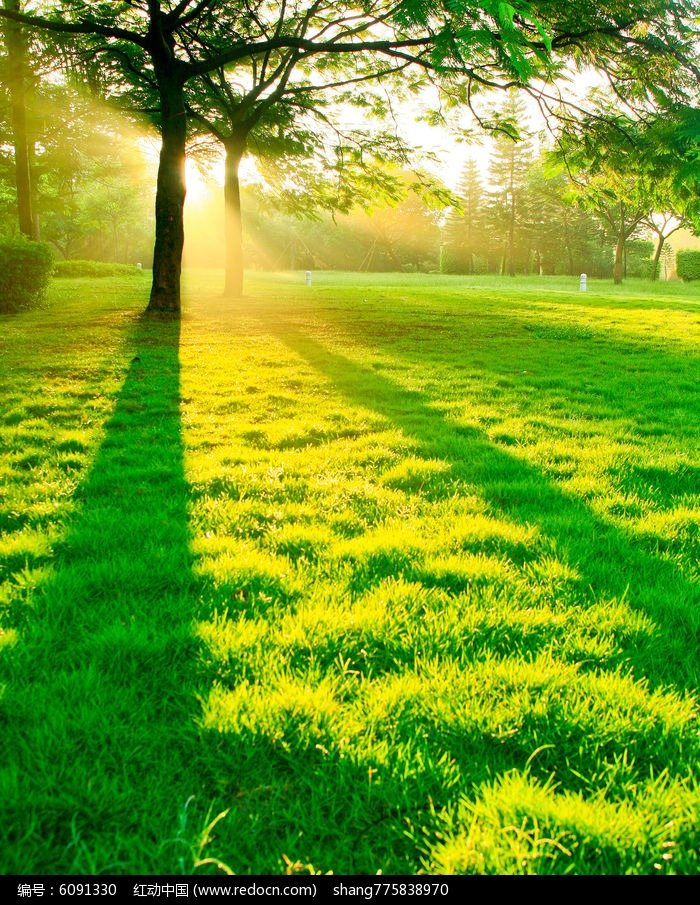 夏日晨光图片