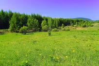草甸野花盛开