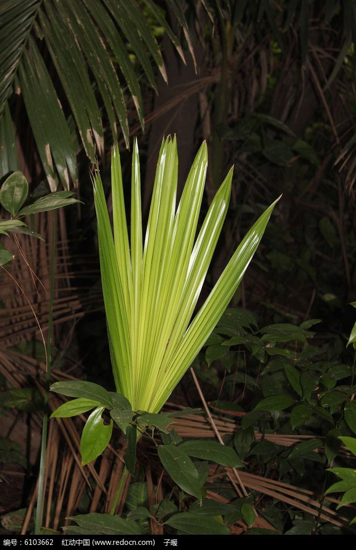 热带植物图片,高清大图