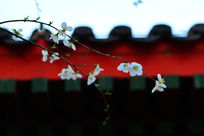 屋檐下的花朵