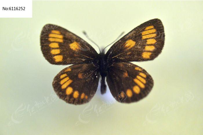 原创摄影图 动物植物 昆虫世界 酡红眼蝶  请您分享: 红动网提供昆虫