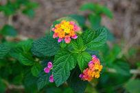 多种颜色的花卉