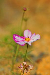 粉红色花朵摄影