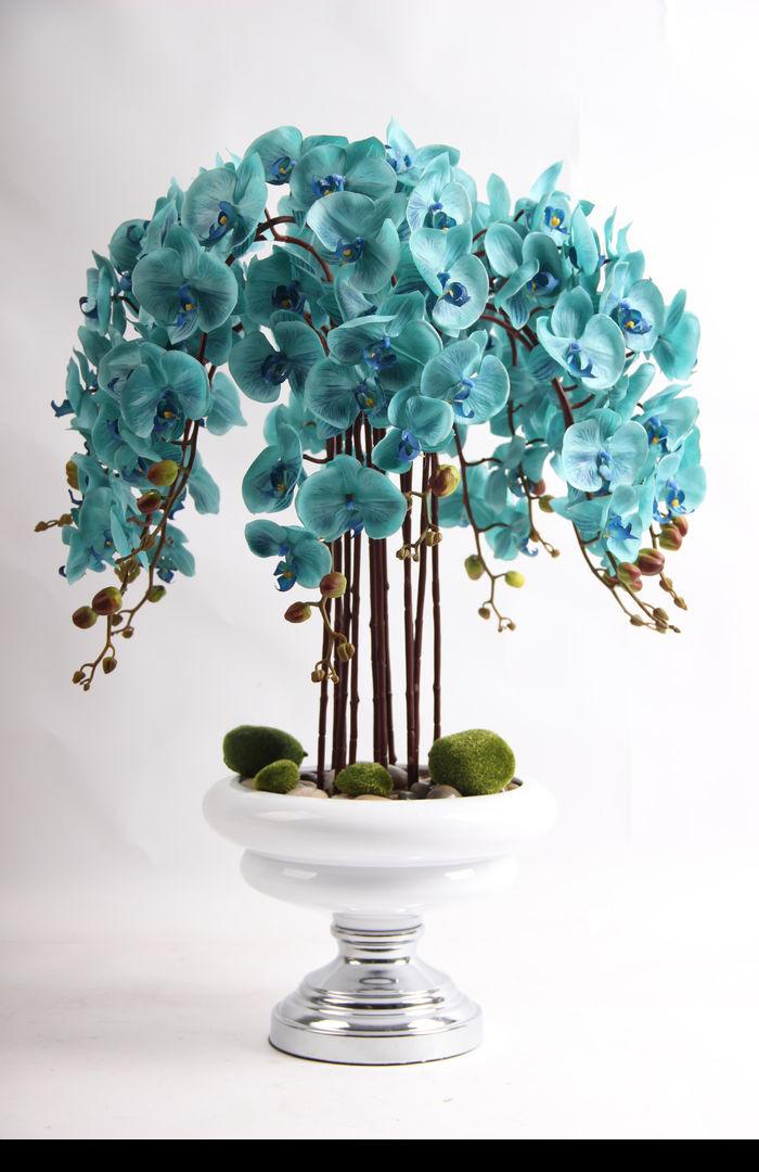 原创摄影图 动物植物 花卉花草 客厅桌面绿植插画摆件