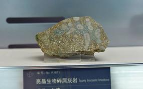亮晶生物碎屑灰岩