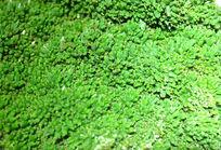 绿色矿石纹理